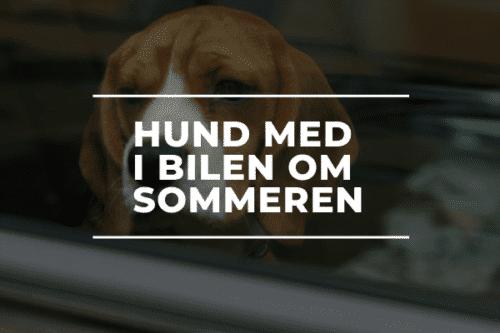 Hund med i bilen om sommeren sorø automekanikerens råd